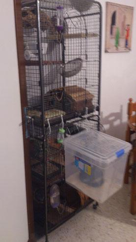 La caja va sujeta a la jaula, mediante ganchos de alambre gruesa