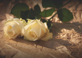 2 weiße Rosen