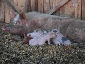 Ratafia et ses petits