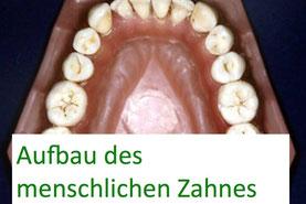 Bestandteile Zahn