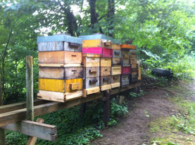 Waldbienenstand in Kirchschlag Juli 2014