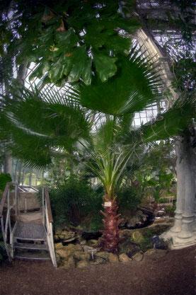 die Palmnhaus.brücke