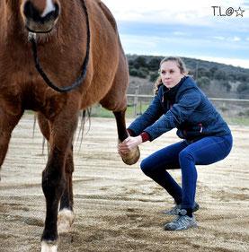 osteo equin