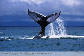 excursion des baleines