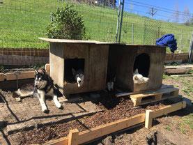 Die vier Musketiere, Merkur, Eagle, Amarok und Blizzi testen das neue Reihenfamilienhaus.
