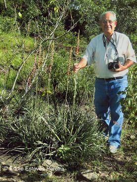 Dyckia piracanjubensis, Typstandort / type habitat / habitat do tipo