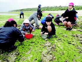 アーサ採りを体験した竹富小中学校の児童生徒たち=1日、竹富島東海岸