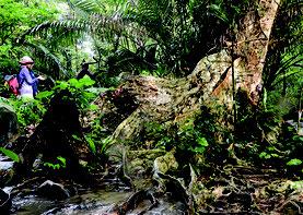 観光ガイド業が盛んな西表島(資料写真)