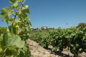 accueil vignoble en gite dans l'Aude à Montgaillard en corbières