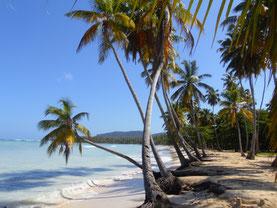 Dominikanische Republik, Dom Rep, Samana, Las galeras, Strand, Traumstrand, Palmenstrand