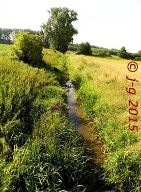 Typisch für das südliche Hessische Ried: Grabensysteme