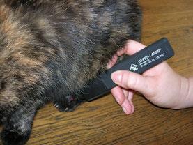 CEPES-Laser-Behandlung bei einer Katze, Tierheilpraxis mit Herz