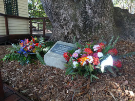 Stokes memorial Tree in Eumundi