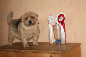Katie mit Ihren Auszeichnungen