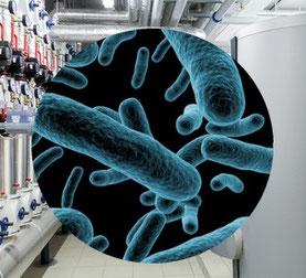 Gefährdungsanalyse bei Legionellen in Köln
