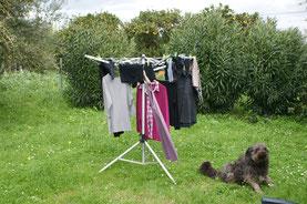 Chika bewacht die Wäsche