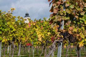 Mit dem Wohnmobil in Österreich: Reisetipps