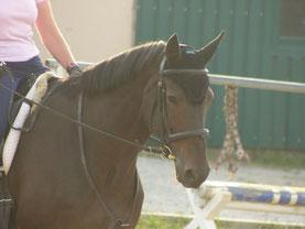 Blockaden beim Reiten Problempferd Pferd Angst beim Reiten