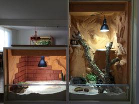 Bartagame: Terrarium aus OSB