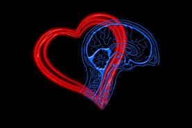 Herz und Gehirn verbunden - Emotionale Intelligenz