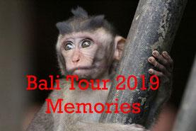 Bali Reise, Rundreise, Tauchen, Padangbai, Tulamben, Kintamani, Lovina, Pemuteran, Mejangan, Ubud, Kultur,