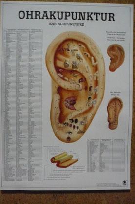 Bild: Praxis für Naturheilverfahren, Berchtesgadener Land, Ohrakupunktur Rückenschmerzen. Orthopädische Erkrankungen Neurologische Erkrankungen HNO-Erkrankungen Magen-Darm-Erkrankungen