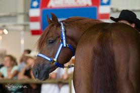 Stallion Promotion Americana 2015