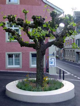 Sitzring in Liesberger Kalkstein