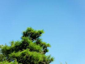 愛知県指定遺跡:大地遺跡の空     2015/08/23
