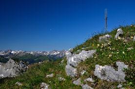 Gipfelkreuz , Berge , Alpen , Tannheimer , Panorama , Fernsicht , Landschaft , Natur , Blumen , Blauer Himmel , Wandern , Österreich , Austria , Hüttentour , Mountains , Alps , Europe , Landscape , View , Summit ,