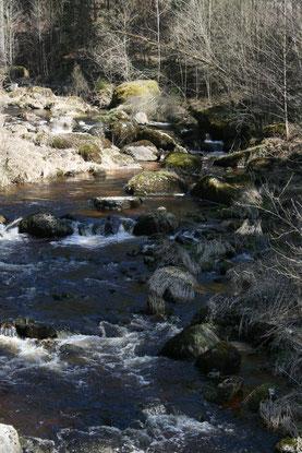 Typická rezavě hnědá voda řeky  Aist