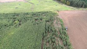 Luftbild Maisfeld mit Wildschaden Agrar Drohne Mecklenburg-Vorpommern