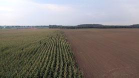 Drohne gegen dem Maiszünzler Agrar-Drohne