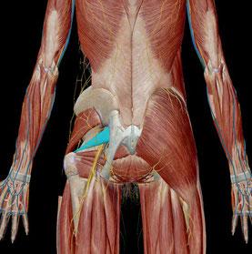 坐骨神経痛 梨状筋 原因