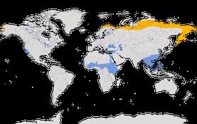 Karte zur Verbreitung des Rotkehlpiepers (Anthus cervinus)