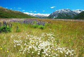 reine Natur Neuseeland