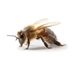 Bienengift in Gesichtspflege