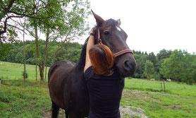 Manuelle Therapie - Mobile Tierheilpraxis Schinko