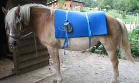Magentfeldtherapie - Mobile Tierheilpraxis Schinko
