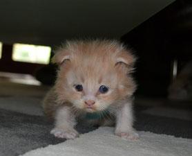 Kitten with FCK Flat Corsage 03