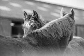 Stal Zwetsloot - Paardenrusthuis