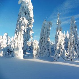 Menschen beim Schneeschuhwandern am Silberberg in Bodenmais. Die LAndschaft ist ein Winterwunderland, Tiefschnee und verschneite Bäume.