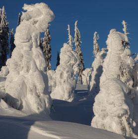 Schneeschuhtouren, Schneeschuhgehen, Schneeschuhwandern, geführt, mit Guide, Bodenmais, Bayersicher Wald, Arber