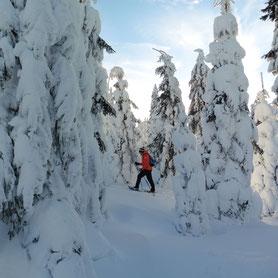 Ein Mann geht mit Schneeschuhen bergab im Tiefschnee. Scheeschuhwandern am Bretterschachten in Bodenmais im vielseitigen Gelände.