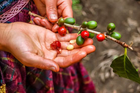 Fairtrader, kaffeekompetenz, kaffee-kompetenz, kaffeeliebhaber, barista kaffeemaschine, siebträgerkaffeemaschine, siebträgermaschine, simonelli, simonelli kaffeemühlen, kaffeemühle, mühle simonelli, nuova simonelli