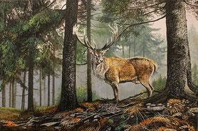 Rothirsch im Nebelwald 40x 60
