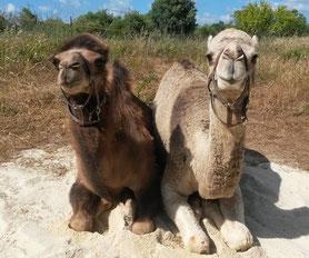 Rashid und Jamal sind Portugals erste Dromedare in privater Hand. Liebe Grüße an Andrea!