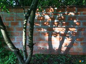 Connaitre l'ensoleillement de son jardin - Vecteurs d'ombre : arbres et murs