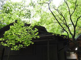 四季の短歌 鎌倉報国寺