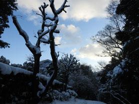 雪・親水緑道の道